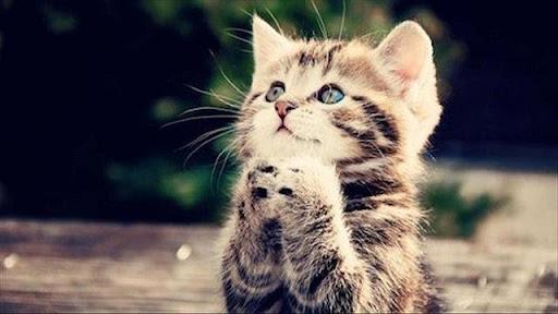 Chọn số phù hợp khi thấy mèo trong mơ để ăn tiền như ý