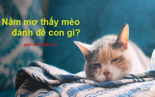 Mỗi hình ảnh của một chú mèo lại có ý nghĩa khác nhau