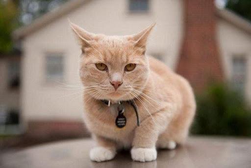 Bạn đã biết nằm mơ thấy mèo đánh con gì rồi chứ?