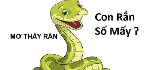 Đánh lô đề hàng rắn